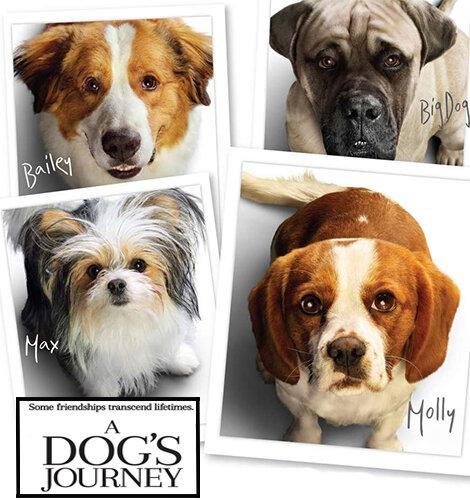 8 Jenis Anjing Lucu Dan Peran Unik Nan Memukau Komentar Ed Catchplay Streaming Online Film Dan Drama Serial Full Hd