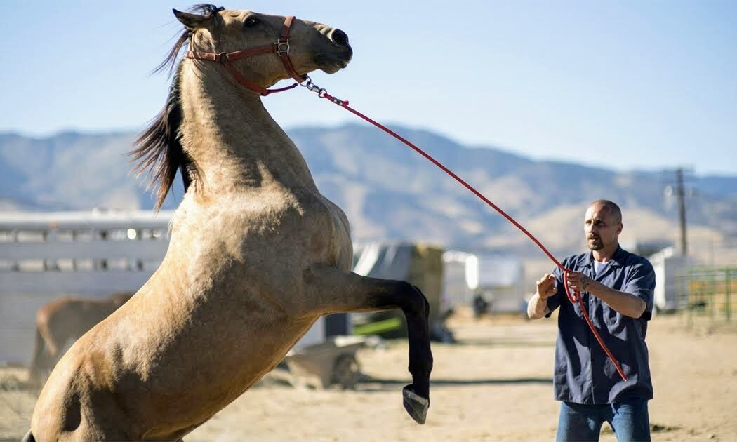 The Mustang Review - An Incredible Journey Shared between Prisoner and Horse